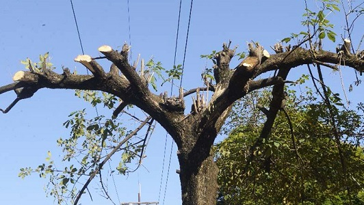 Se dispararon las multas contra la poda irregular de árboles: hasta $ 40.000