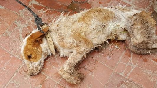 Insólito: Perro quedó atrapado entre dos paredes y fue una lucha sacarlo