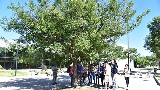 Sólo en las veredas del centro hay 6.679 árboles ¿Cuál es el que predomina?