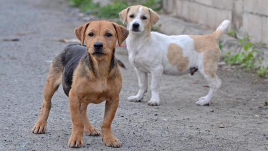 Subsidio a Protectora y descuentos impositivos para quienes adopten perros