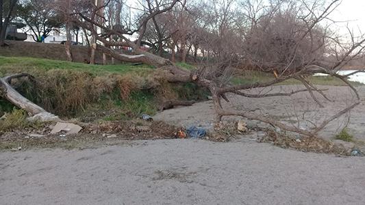 Una playa que pide mejoras: Basura y árbol caído en la bajada Tucumán