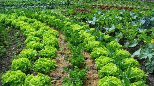De la huerta a la mesa: vecinas de La Calera producen y venden frutas y verduras