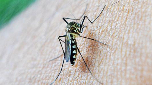 Investigan en Villa María para dar con la cura del Chagas y la malaria
