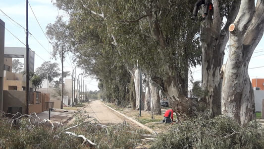Villa Nueva: Siguen las podas en altura en los barrios