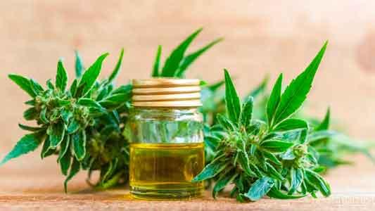 Juez de Villa María avaló tratamiento con aceite de cannabis para adolescente