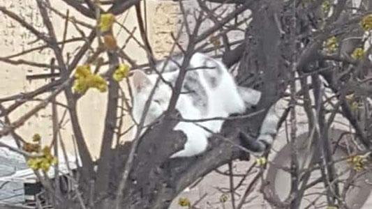 Movieron cielo y tierra para rescatar un gato y ¡Lo lograron!