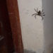 Embarazada vive al lado de un baldío y convive con insectos