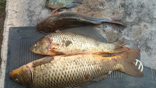 Ucacha: detuvieron a cuatro personas por pesca ilegal en una reserva natural