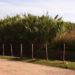 Se puede saber cuánto debe de impuestos cada terreno de Córdoba