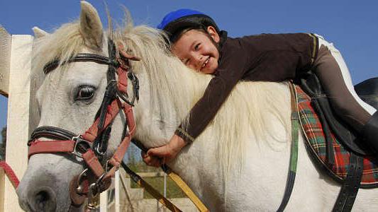 Animales que sanan: Buscan voluntarios para trabajar con caballos en equinoterapia