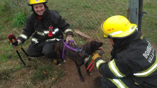 Rescataron una perra de incidente en refugio canino de Villa Nueva