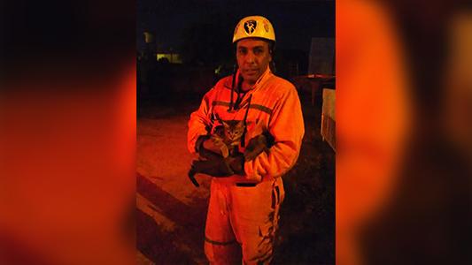 Gran gesto: Bomberos rescataron a gatito sin dueño de un pino y vecina lo adoptó