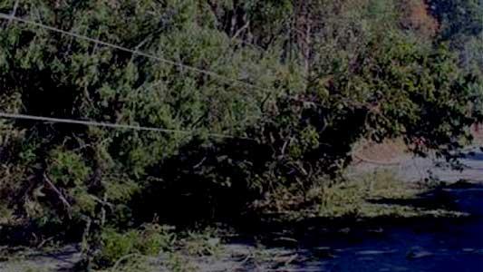 Viento de 40 kilómetros por hora provocó caída de árbol y cables