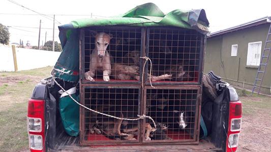 Cinco detenidos por cazar con galgos en zona rural de Villa Nueva y La Laguna