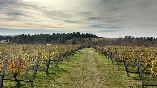 Córdoba suma una nueva experiencia turística: los Caminos del Vino