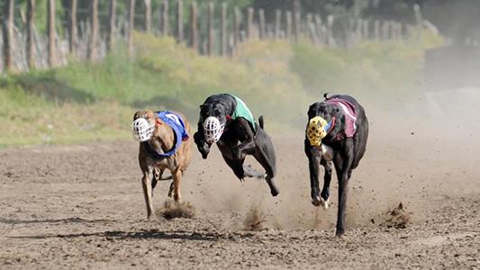 Impulsan el primer juicio a una persona por organizar carreras de perros en Bell Ville