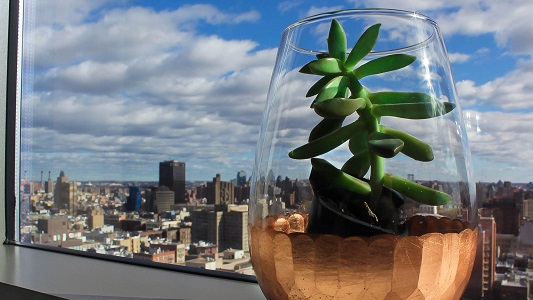10 tips de ecología para implementar en nuestra casa