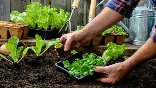 Días y lugares de entrega de semillas para hacer la huerta en tu casa