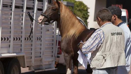 Alerta por enfermedad infecciosa: Detectan 4 caballos contagiados en el Hipódromo