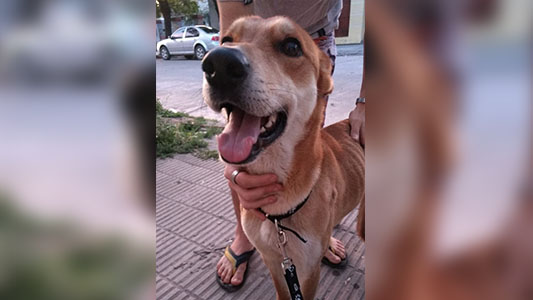¡Milo tiene nuevo hogar! El perro que vivía sólo, ahora tiene familia que lo cuide