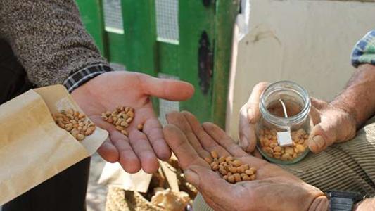Realizarán intercambio de semillas y plantas para aprender y cuidar el medioambiente